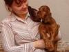 Contario Ode Truviero, 6 weeks, silver boy