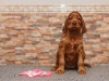 Contario Ode Toccata, 6 weeks, pink girl