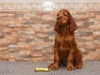 Contario Ode Triada, 6 weeks, olive girl