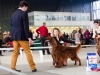 Fairhaven Quantum Satis irish red setter