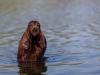 Fansett Teddy Bear