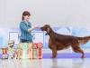 World Winner Puppy'16 - Contario Ode Truviero