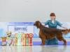 World Winner Puppy'16 - Contario Ode Truviero ( Contario Ode Capella & Dubliner Alejandro)