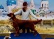 Международная выставка собак всех пород «Владимир 2020» (РФОС) / IDS «Vladimir 2020»