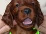 2005-2008- Детство Венди