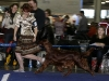 Contario Ode Winconta на Евразии 2011, 2*СAC, 2*CACIB, 2*BOS, 2*Чемпион РКФ
