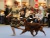 Contario Ode Winconta, Finnish Winner Show 2011, CAC, CC, CACIB, BOB