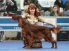 Россия 2011, Contario Ode Winconta - CAC, CACIB, BOB, Best in Group - I