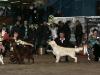 Украина, Харьков 2011, Contario Ode Winconta - CAC, CACIB, BOB, Best in Group - I