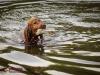 Dioskury Driada (Дрю). Сентябрь 2012, 9 лет и 10 месяцев. Она любит поплавать
