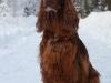 Contario Ode Capella (4,6 years), Январь, Финляндия