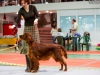 Contario Ode Palmira -  2*CW, 2*CAC, 2*Best Breed Bitch
