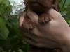 Лиловая ленточка, кобель