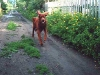 Алей на даче в Барнауле