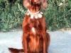 Алей  после Краевой выставки охотничьих собак