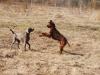 Наши собаки на прогулке. Апрель 2014
