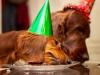 День Рождения Бруно 8 лет