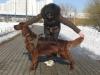 Бруно на прогулке в парке 13 месяцев