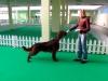 Тренировка (Flash Arena) Бруно 12 месяцев