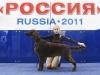 Лучший щенок, «Россия-2011»