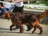 20-05-2012, выставки Гран-При, эксперт: Поливанов (Казань)