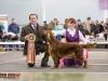 Contario Ode Capella - Лучшая собака монопородной выставки Ирландских сеттеров в 2013