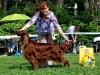 Contario Ode Winconta - Лучший ветеран выставки в мае 2013
