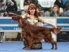 Contario Ode Winconta, Лучшая собака 7 группы на международной выставки Россия-2011