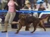 Евразия -  2012, Fansett Secret Contario Ode - Best Junior Dog