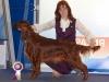 Евразия - 2012, Contario Ode Capella - CAC, CACIB, Лучшая сука породы, квалификация на Крафт