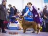 Eurasia 2013, Contario Ode Capella - 2*CAC, 2*R.CACIB Judges Hana Ahrens and Hans Rosenberg
