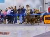 Eurasia 2013, Mult.Sh.Ch. Contario Ode Winconta - R.CAC, CAC, CACIB, Best Breed Bitch Judges Hana Ahrens and Hans Rosenberg