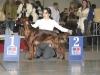 BITCHES INTERMEDIATE CLASS - Dioskury Image Ready - CW, CAC, 4th best breed bitch вл. Терентьева, Екатеринбург