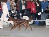 DOGS JUNIOR CLASS - Contario Ode Whirlwind Fire (Вик) - R.CW Вл. Иванова А, Казань