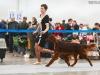 Монопородная выставка ранга ПК в рамках России 2014, Contario Ode Opium - RCW, CC