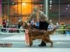 Contario Ode Caprice - CW, CC, 3я Лучшая сука