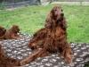 Внимательная бабушка щенков Дриада