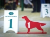 Irish Setter Club Speciality 2013, Moscow