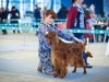 Irish Setter Club Speciality 2013, Moscow, Contario Ode Caprice - R.CW, CC