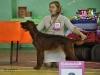 Contario Ode Colibri, Лучший юниор породы, сент 2011, г. Красноярск