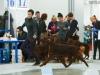 Contario Ode Opium- Russia - 1- CW, JCAC, BOB Junior,  Russia -2 -  3exl