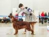 Россия - 2013-2, Contario Ode Caprice - CW, CAC, CACIB, Чемпион РКФ, Best Oof Breed!