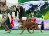 Contario Ode Caprice, Лучший щенок породы