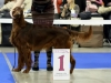 Fansett Secret Contario Ode- Best Breed Junior
