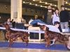 Победитель промежуточного класса, вторая Лучшая сука породы Contario Ode Capella и Победитель рабочего класса, третья Лучшая сука породы Contario Ode Infiore