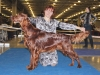 Лучший юниор породы на Монопородной выставке Ирландских сеттеров и на выставке им. Сабанеева - Fansett Secret Contario Ode