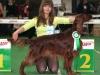 Contario Ode Winconta Лучшая собака монопородной выставки Ирландских сеттеров, февраль 2008