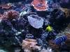 Рыбки:)