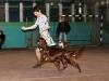 Contario Ode Capella, Юный чемпион Украины, Лучший юниор и Лучший представитель породы, Вторая лучшая собака 7 группы