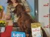 Contario Ode Capella,  Лучший юниор и Лучший представитель породы, Вторая лучшая собака 7 группы